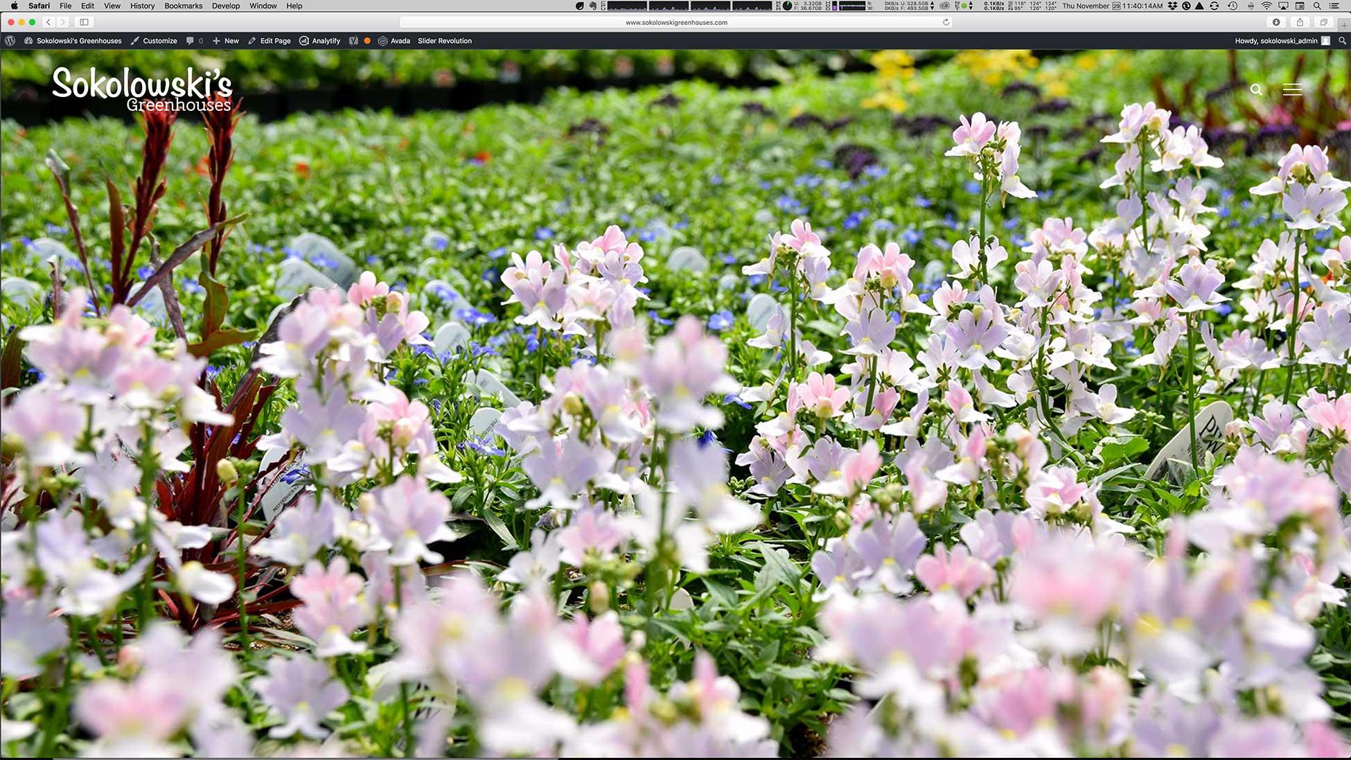 Image of Sokolowski's Greenhouses website homepage.